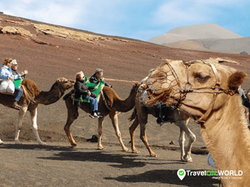 The Famous Camel Ride in Lanzarote