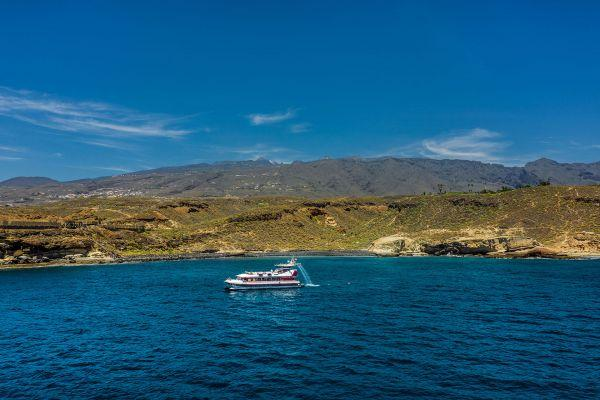 whale-watching-tenerife_2