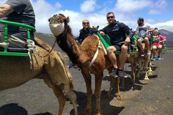 camel-ride-lanzarote-tour_1