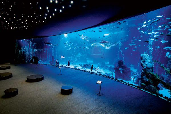 poema-del-mar-gran-canaria-aquarium_1