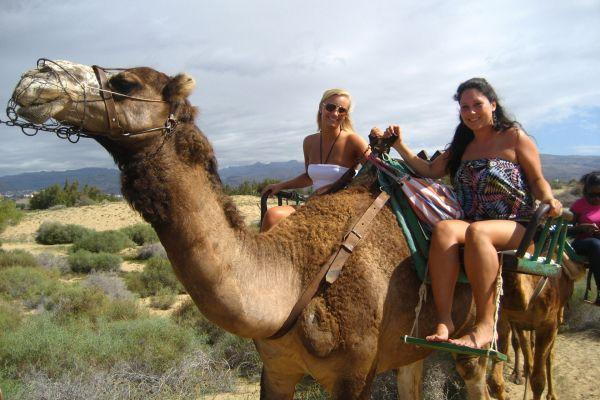 camel-park-tenerife-excursion-30-mins