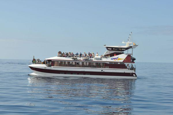whale-watching-tenerife_8