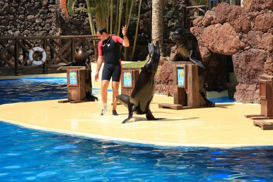 oasis-park-swim-with-sealions_4
