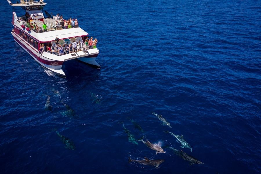 whale-watching-tenerife_7